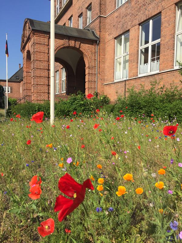 Neumünster: Blumenwiese vor der ehemaligen Helene-Lange-Schule